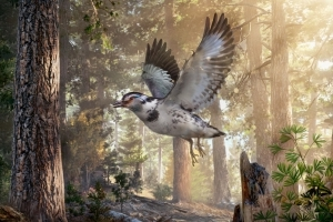 'Messy' New Species of Dinosaur-Era Bird Discovered