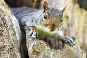 New York Hunter Contracted Rare and Fatal Disease After Eating Squirrel Brains
