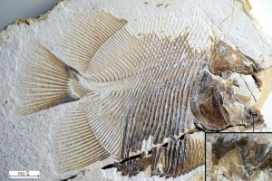 Fossil of flesh-eating fish and its victims captured in 150-million-year-old crime scene
