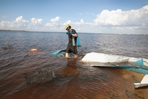 Sewage spill from Hurricane Michael suspected in Florida fish kills
