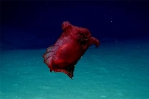 'Headless Chicken Monster' Filmed In Antarctic First