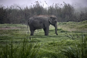 Speeding Driver Hits Elephant, Gets Crushed to Death