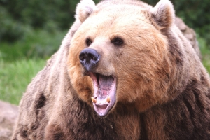 How to prepare for the next bear market