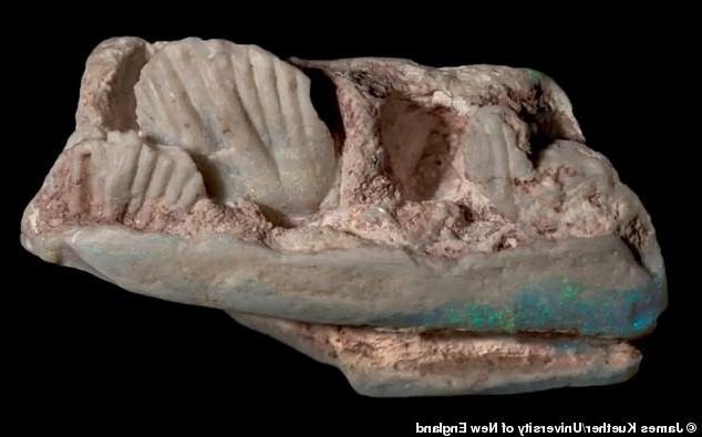 Scientists discover new dinosaur that was the size of a dog after finding its jawbone fossilised in precious opal