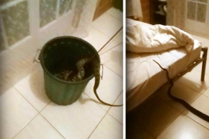 Woman Finds 13-Foot Python in Her Bed, Tosses It Out and Goes Back to Sleep
