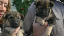 Canada: Puppies abandoned in Costco parking lot adopted