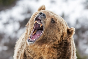 What does it mean when stocks enter a 'bear market'