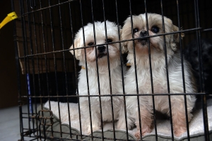 California Will Become First State to Require Pet Stores to Sell Only Rescue Animals