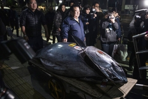 World's Most-Prized Fish Sold for $3.1 Million at Tokyo Auction