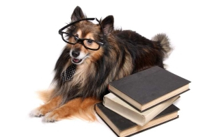 Meet 6 of the World's Smartest Dog Breeds