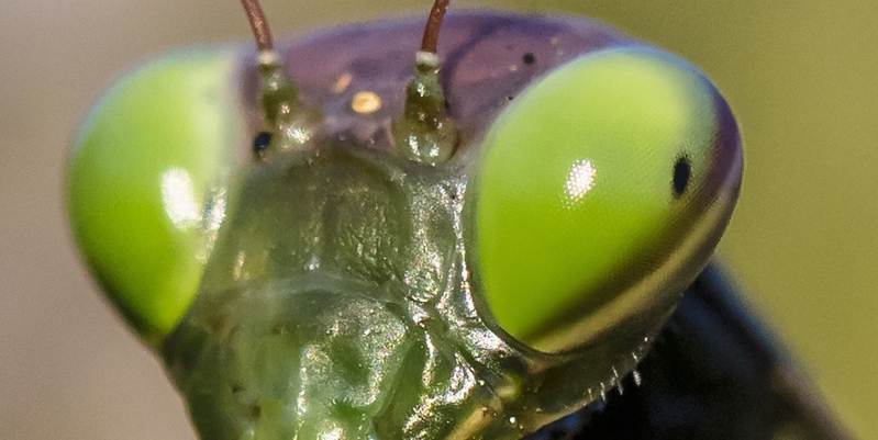 DARPA Wants to Turn Insect Brains Into Robot Brains
