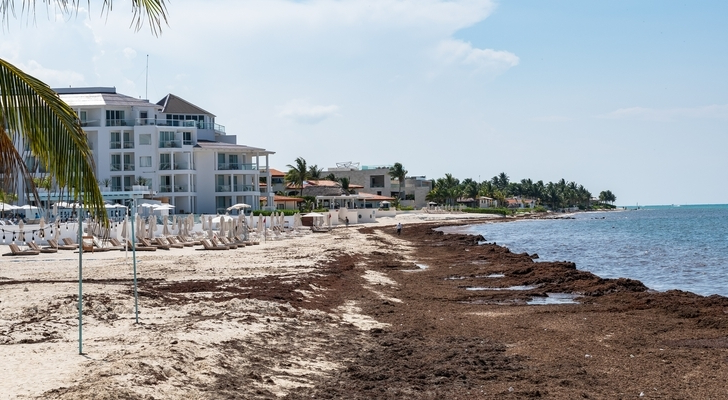 Travel: Experts Predicting Sargassum Influx on Mexican