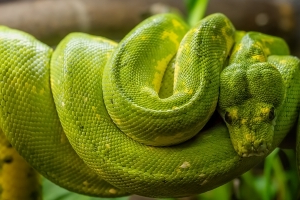 Man Caught Smuggling Snake in Pants at German Airport