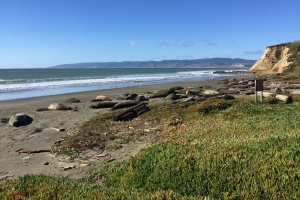 Elephant seals took over a Pt. Reyes beach during shutdown. It won't reopen anytime soon.