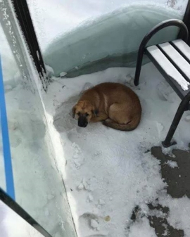 Canada: Freezing dog rescued from Regina bus shelter