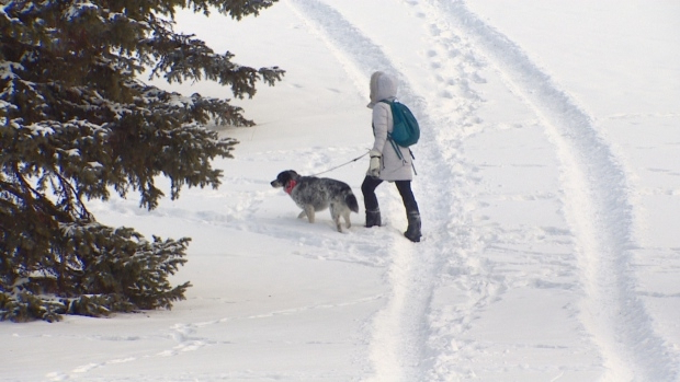 Tips to keep your pets safe from frostbite, boredom during cold snap