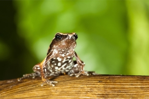 New 'mystery' frog discovered in India