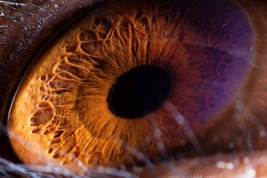 Photographer's Up-Close Images of Animal Eyes Will Have You Seeing Wildlife in a Whole New Way