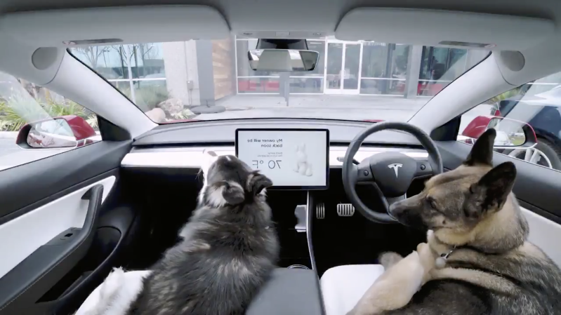 Cars Animal Charities Have Serious Concerns Over Tesla S Dog Mode