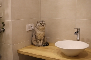 Hidden Camera Catches Ninja Cat Breaking Out of Bathroom