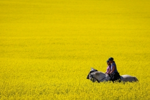 China halts canola shipments from major Canadian supplier