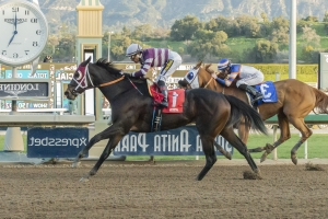 'Something is drastically wrong': After 21 horses die, Santa Anita Park shuts down racing