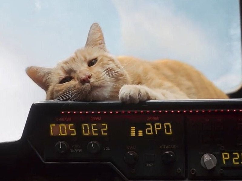Goose the Cat is becoming the breakout star of 'Captain Marvel,' and fans are here for it