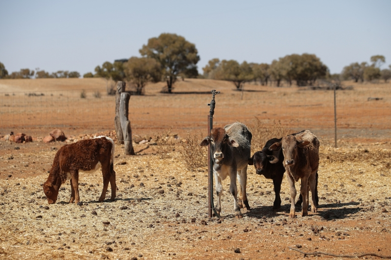 Australia: Queensland crops wither in drought as dams dry