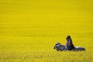 Ministers will testify on Chinese canola spat