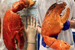 Costco Is Selling Gigantic 3-Pound Lobster Claws