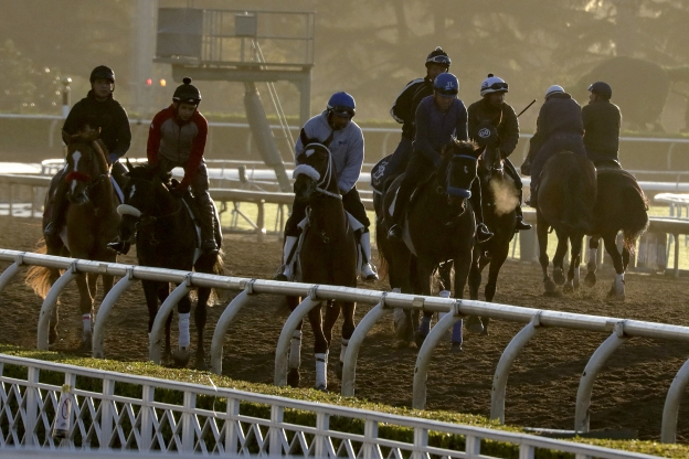 Sport Another Horse Fatality At Santa Anita 23