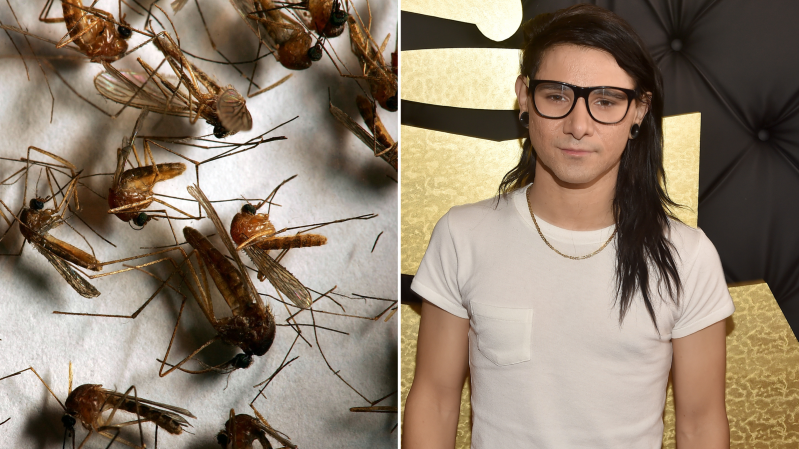 Weird News: Skrillex dubstep 'could protect against mosquitoes