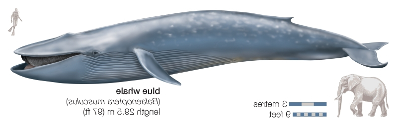 Image result for Four-legged Whale Fossil Reveals When Whales Reached The Americas