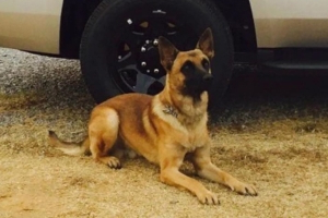 Tennessee K-9 bites, brings down carjacking suspect, cops say