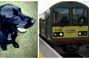 Hero locals race to save 'Kody' the lovable lab after he fell under DART while exiting train at South Dublin Station