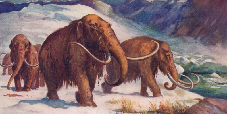 Tech & Science : It Turns Out Neanderthals and Woolly