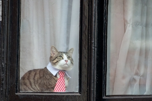 Where's the cat WikiLeaks founder Julian Assange kept at Ecuadorian embassy in London?