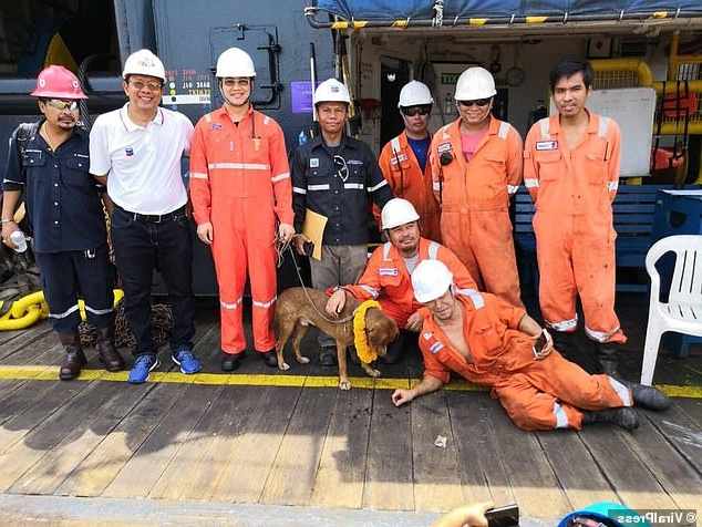Dog is rescued after it's found swimming 135 MILES out at sea: Oil rig workers pluck pooch from Gulf of Thailand - and have no idea how it got there