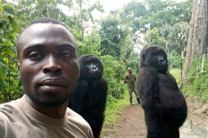Gorillas pose for selfie with anti-poaching officers in the Democratic Republic of the Congo