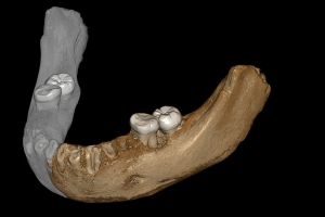 Denisovan Jawbone Discovered in a Cave in Tibet