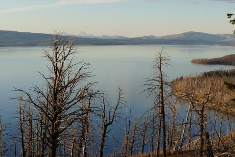 Yellowstone Is Warning People Not to Introduce Invasive Species