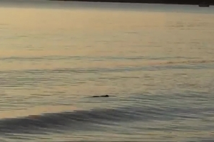 Crocodile spotted lurking in waters on popular Darwin beach