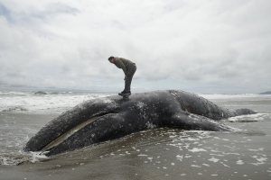 Ninth dead whale washes ashore in San Francisco Bay Area