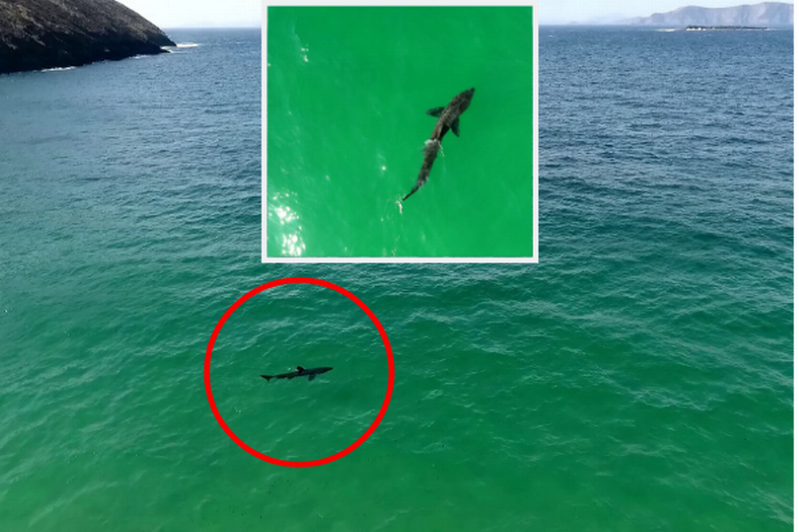 Amazing drone footage shows massive basking shark feeding in Keem Bay, Co Mayo