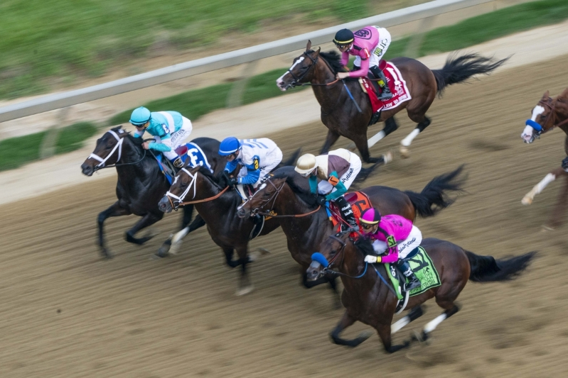 Horse Bodexpress runs entire Preakness without jockey