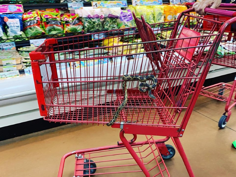 A woman found a snake in her shopping cart at a Trader Joe's in Louisiana, and it's the internet's nightmare come true