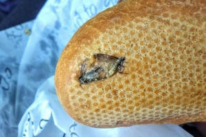 Man takes disgusting photo at Dublin Airport after finding two insects on breakfast roll and posts the snap on Twitter