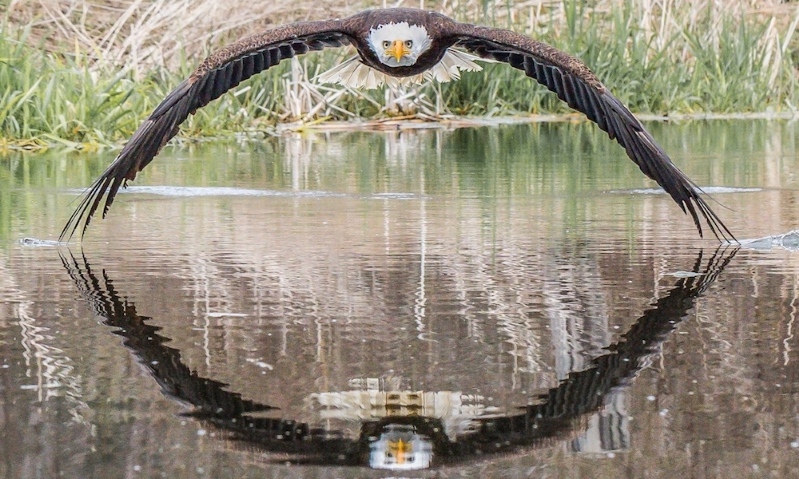 Stunning symmetrical bald eagle photo explained