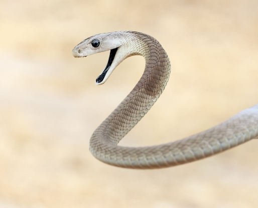 Black Mamba kills SA judge in Zambia