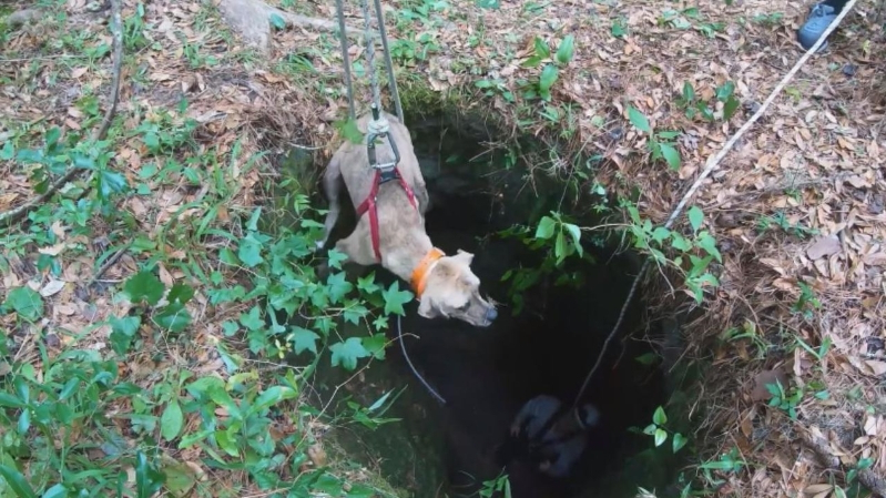 Dog Trapped in Cave for Weeks Miraculously Rescued Thanks to Hiker